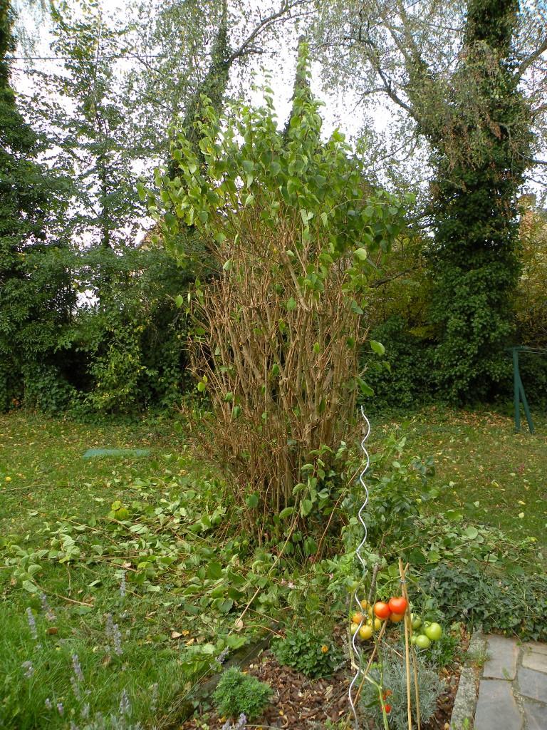 Octobre au jardin for Jardin octobre