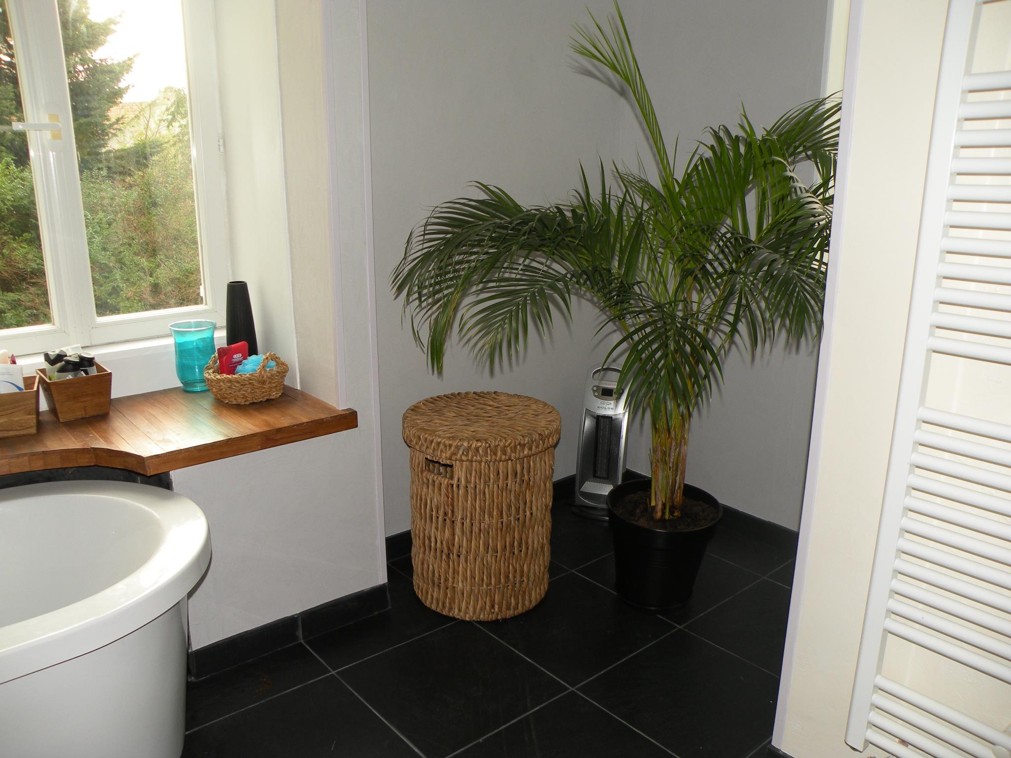 Dans le r tro page 2 - Plante salle de bain ...