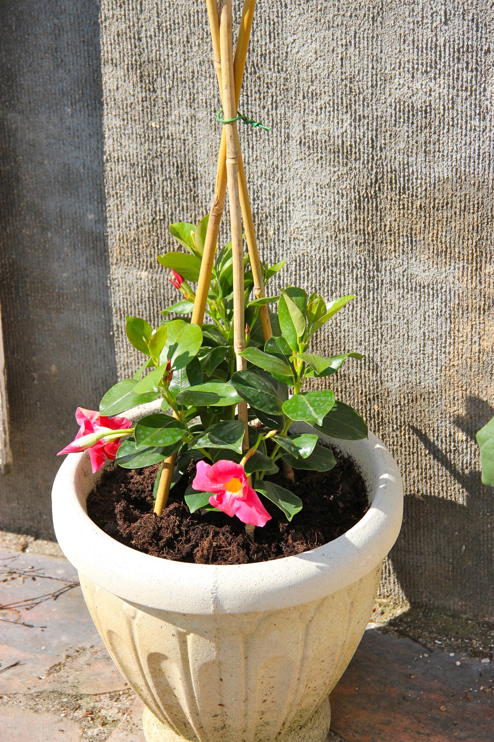 Plantes pour terrasse ensoleill e for Plantes pour terrasses