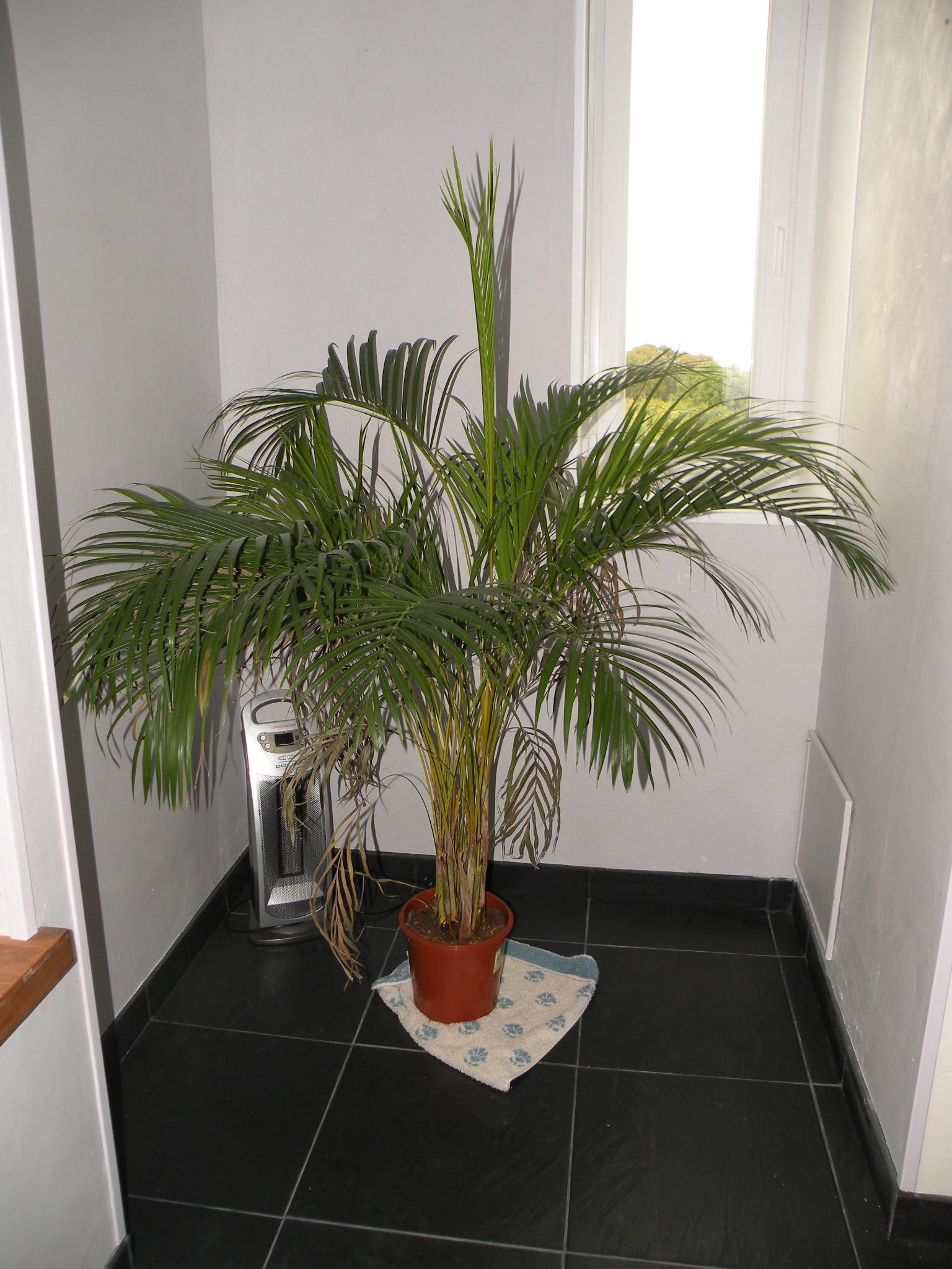 Plante Pour Salle De Bain Sombre avant/après | | page 16